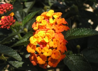 close up photo of orange flowers