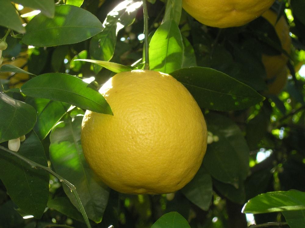 yellow round fruit