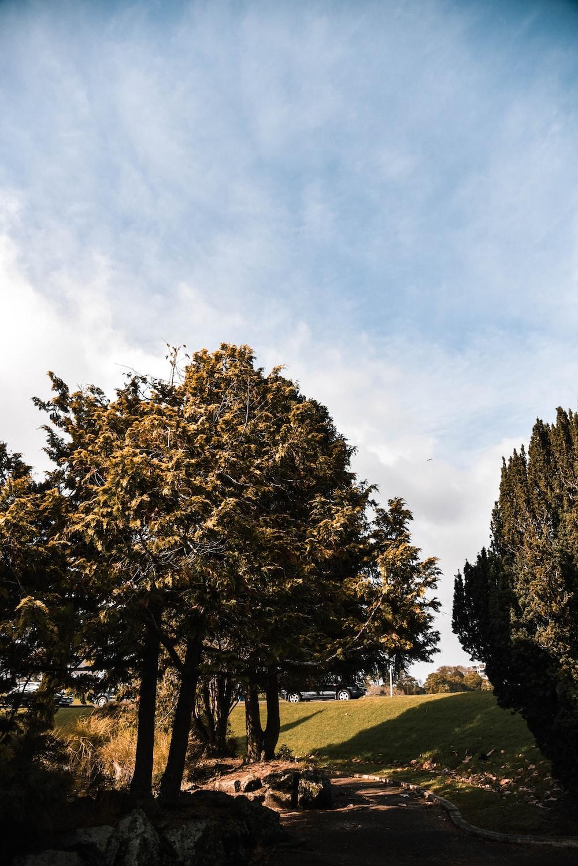 green leafy trees