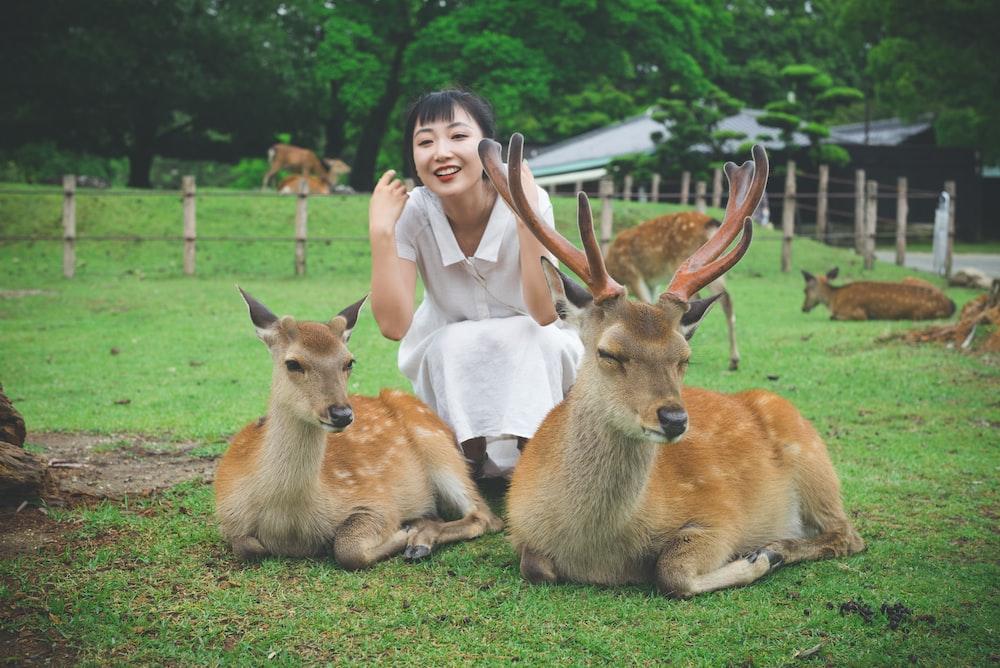 woman sitting beside deers