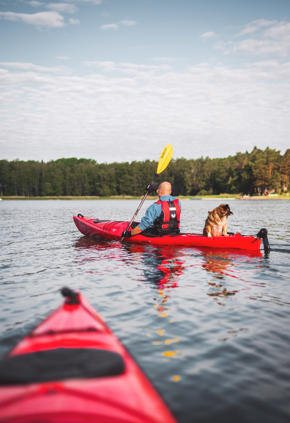 man riding kayak with dog near forest