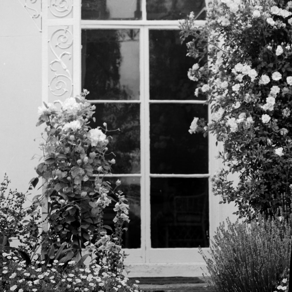 grayscale photo of a window with vines and flowers