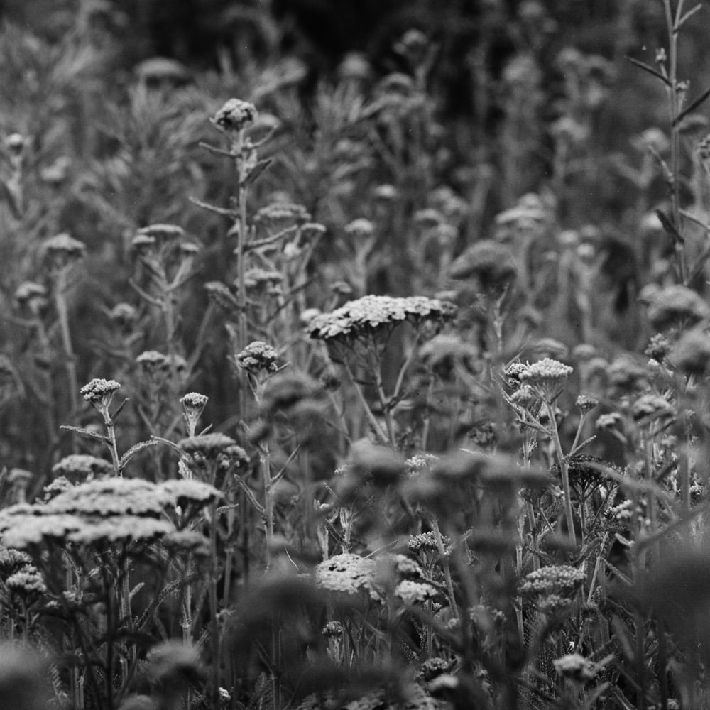 gray scale photo of plants