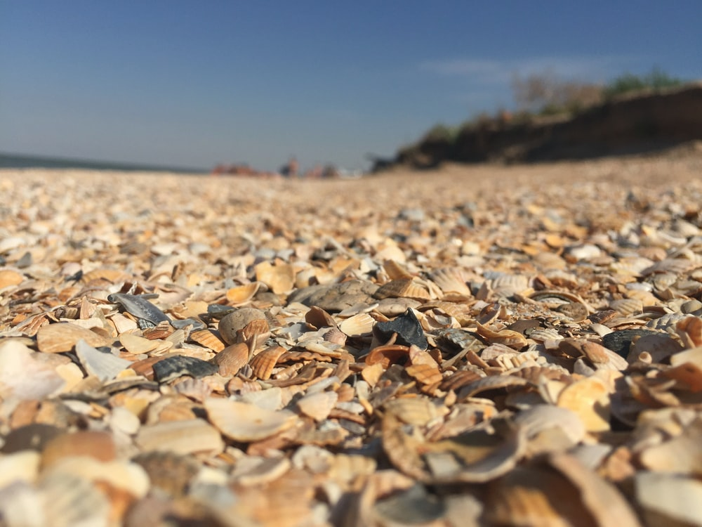 brown sea shells on ground
