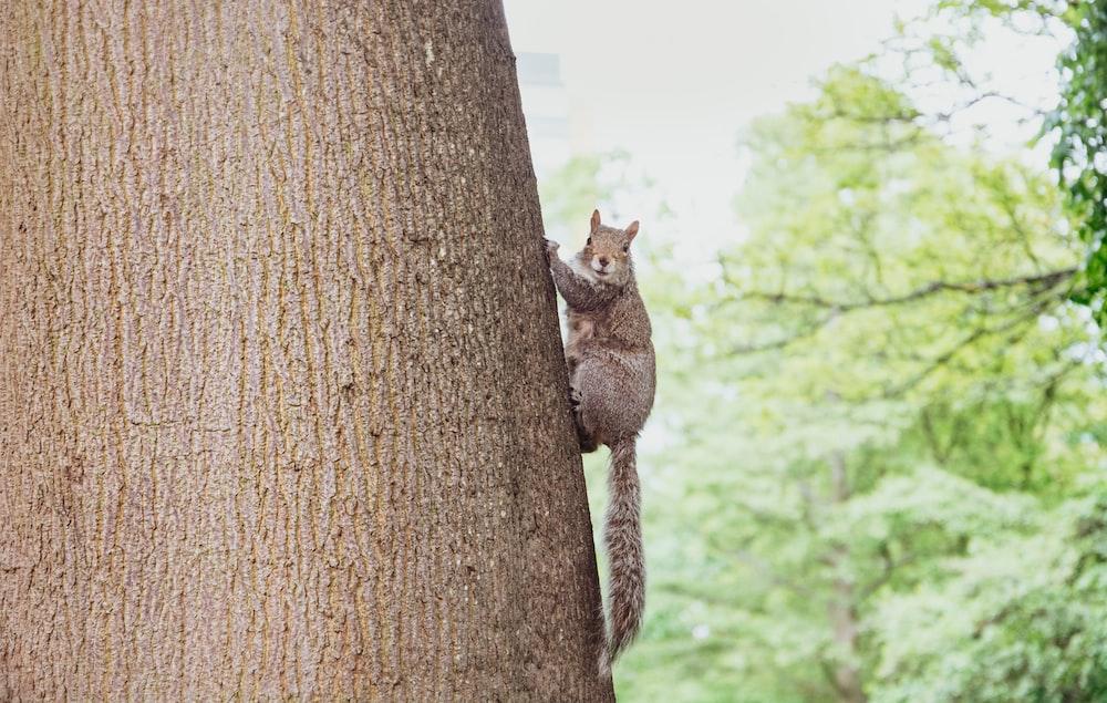 brown squirrel on wood