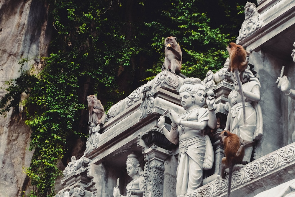 four brown and gray monkeys