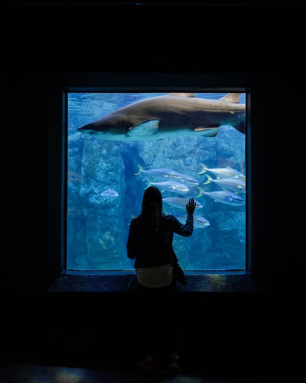 woman standing and facing aquarium window with fish and shark