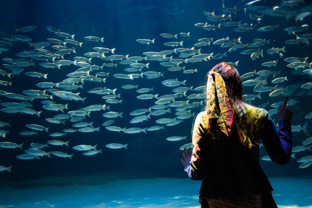 woman standing in front of school of fish