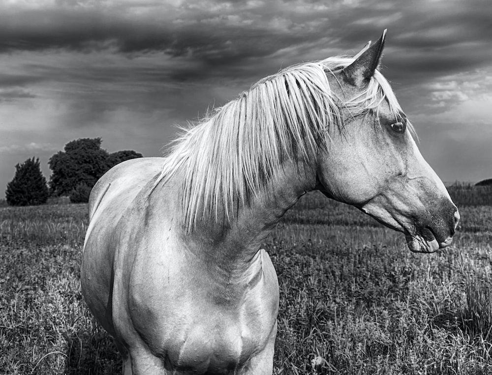 horse at grass field