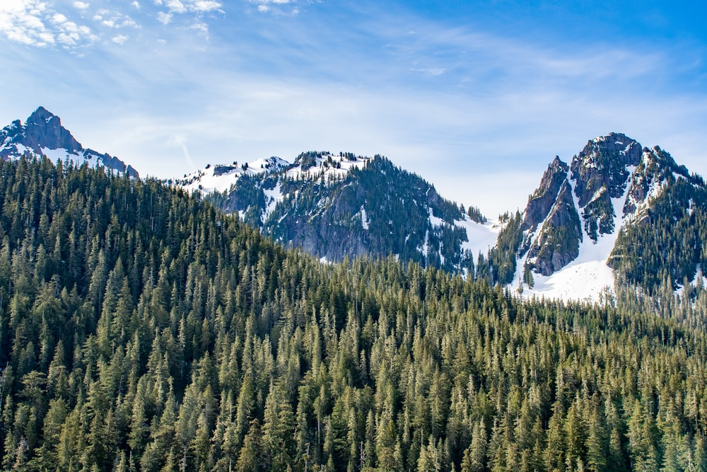 snow-capped mountain and green pine trees