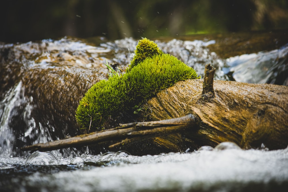tree trunk on river