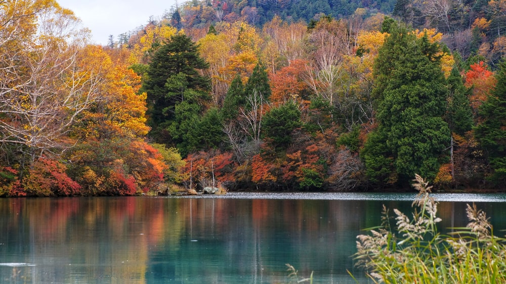 landscape photo of a lake in Autumn