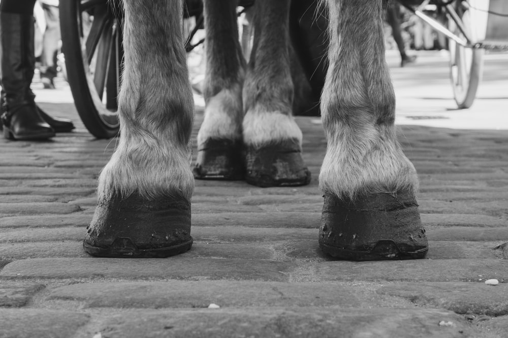 grayscale photo of a horse's feet