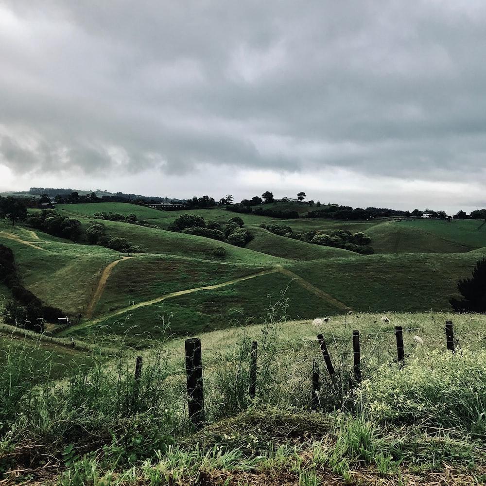 green field under grey sky