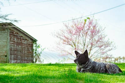 adult short-coated black and brown dog doggo zoom background