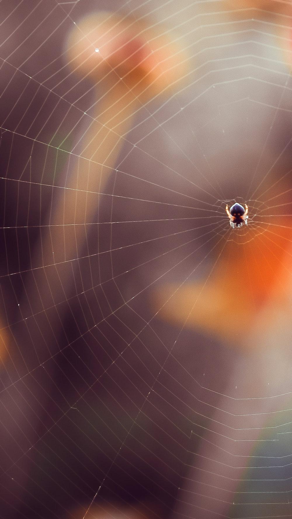 black spider on web