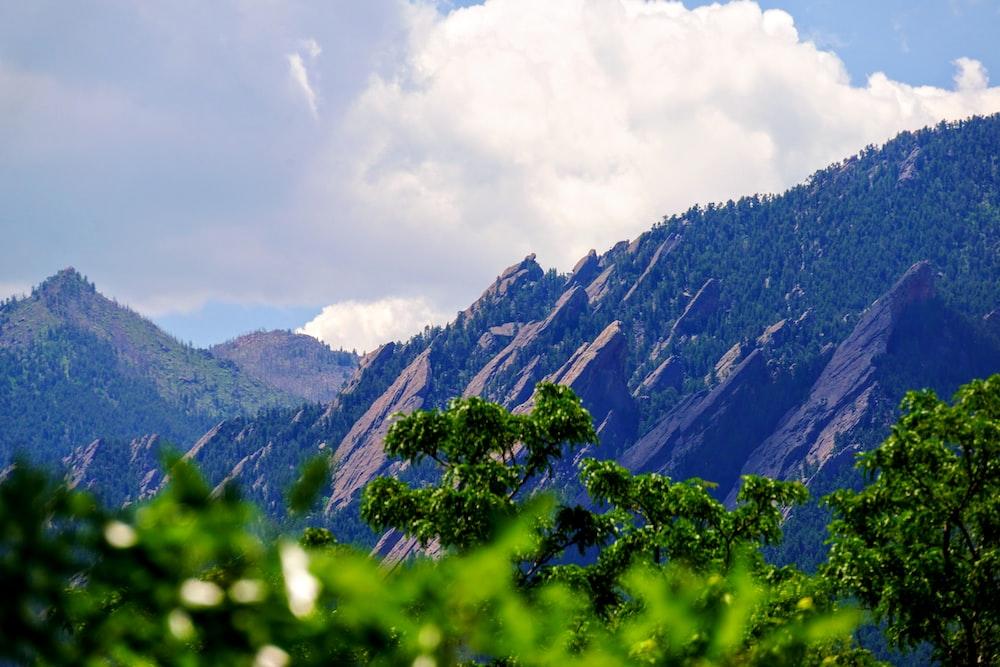 green leaf trees near mountain