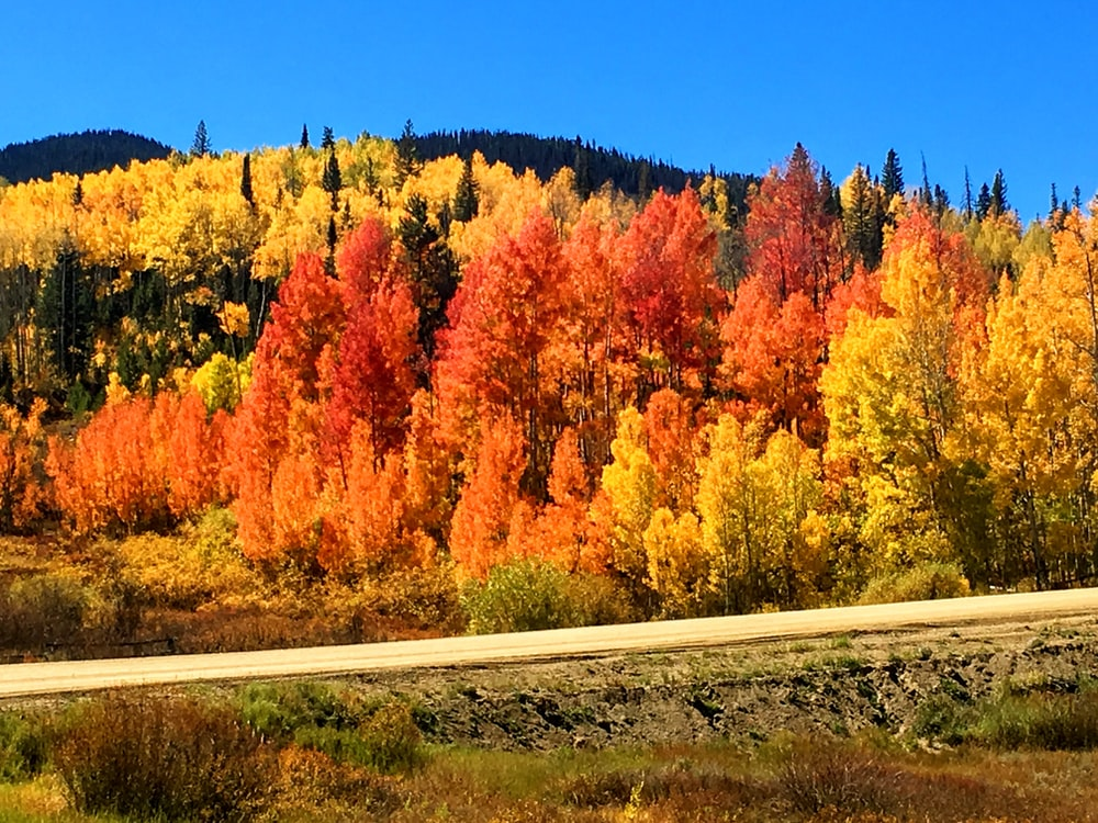 field of red and green trees near road