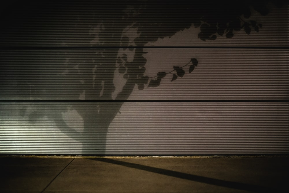 shadow of trees on window blinds