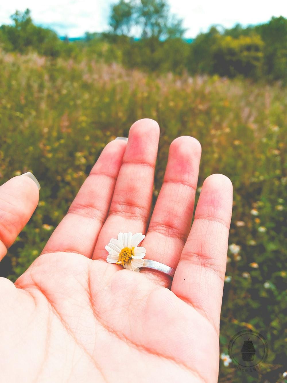 white-petaled flower in hand
