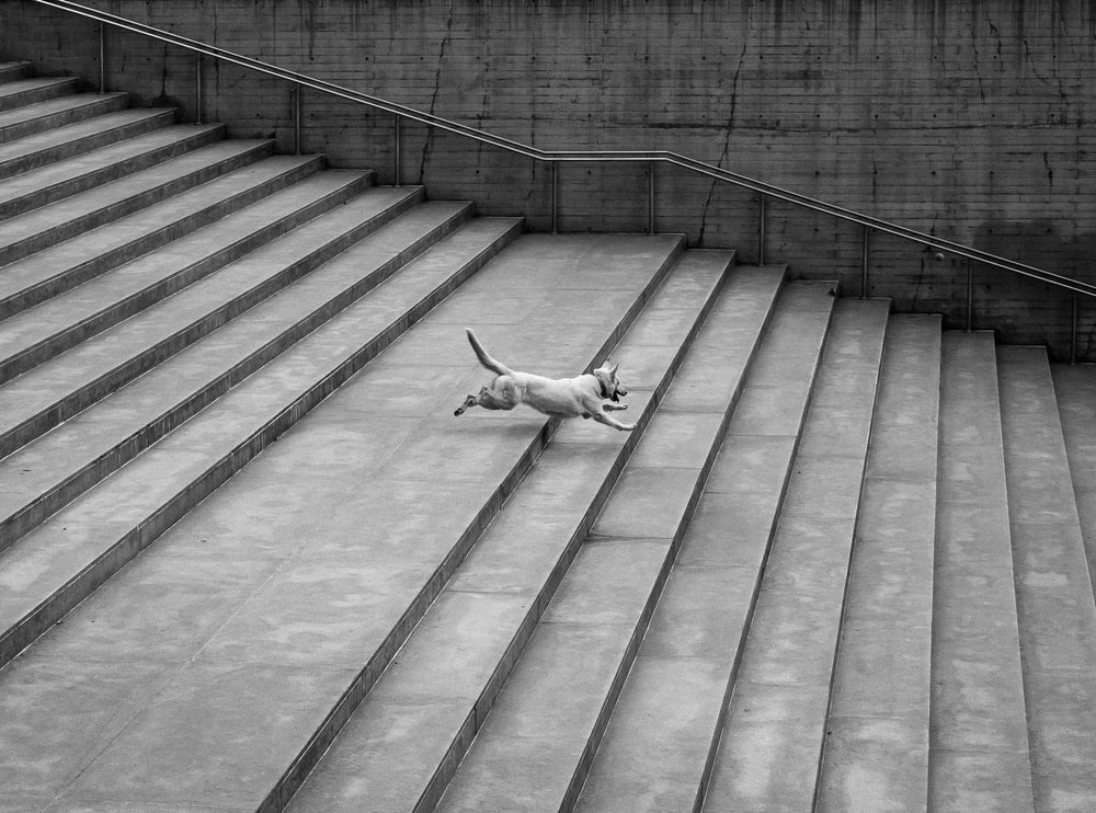 dog running down the stairrs