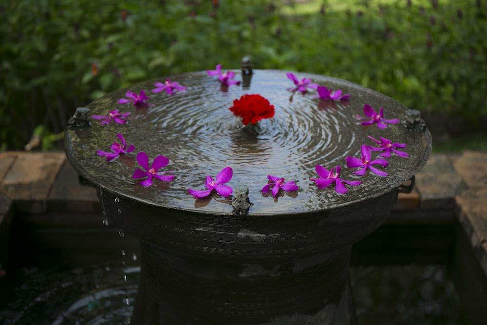 round black bird bath with purple petaled flowers