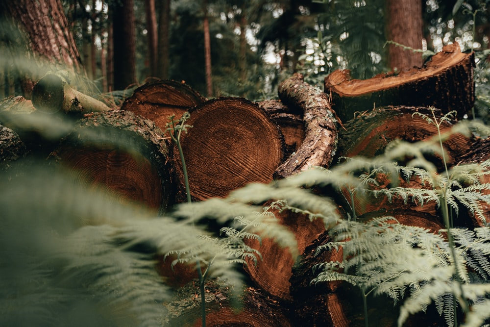 close-up photo of cut wood logs on forest