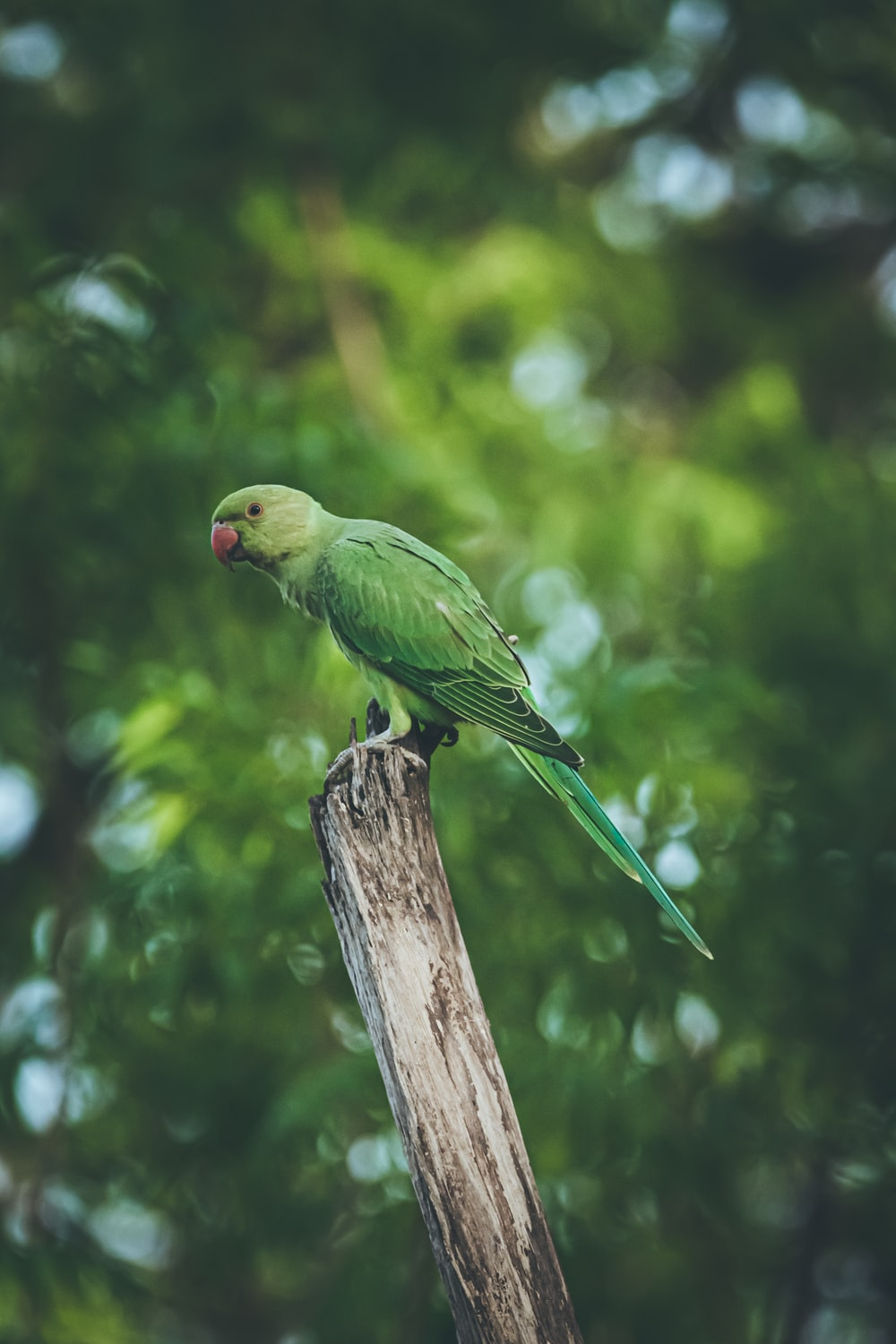 selective focus photography of parrot