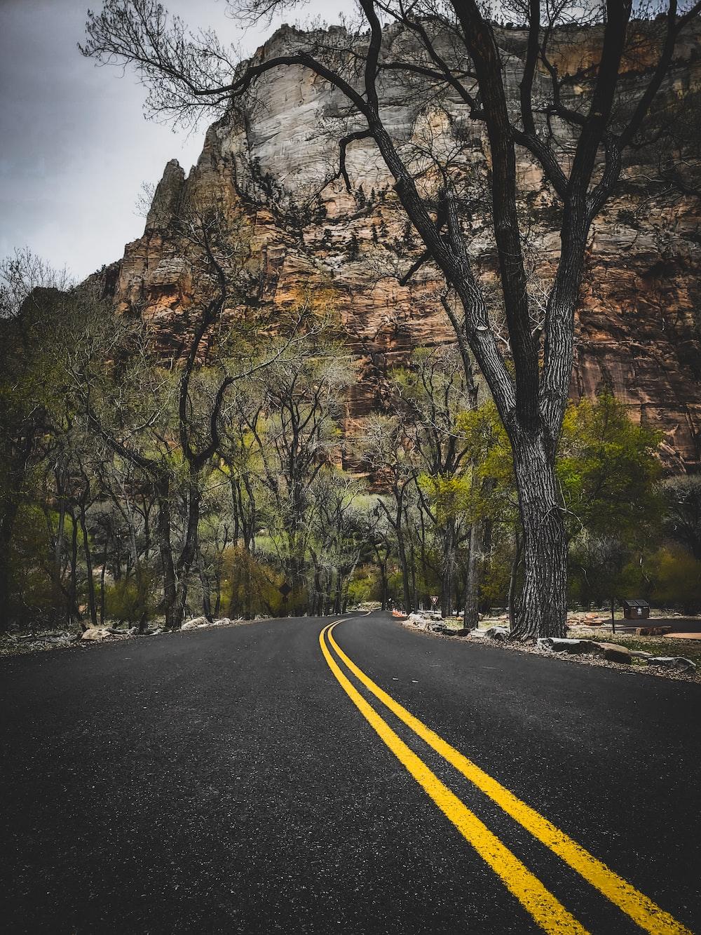 gray road near bare trees