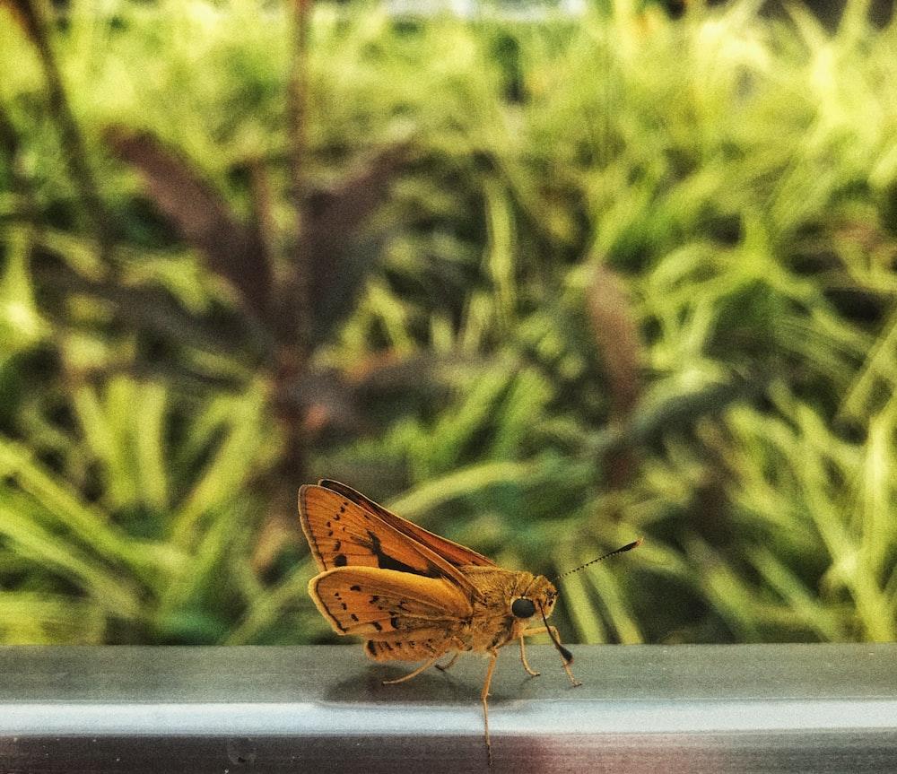 brown moth on window