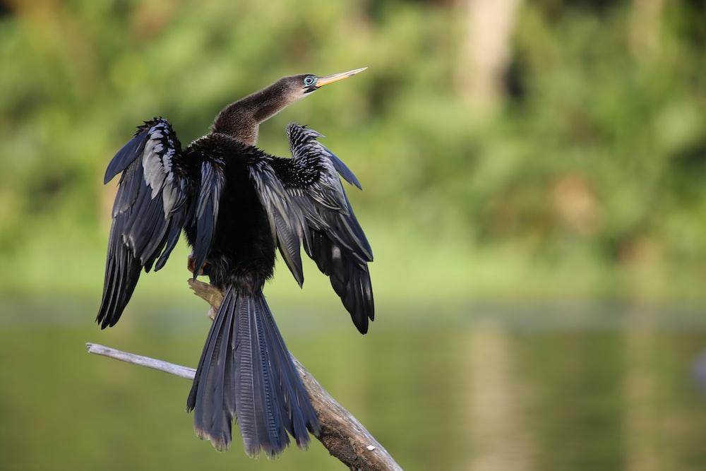 black and gray long-beaked bird