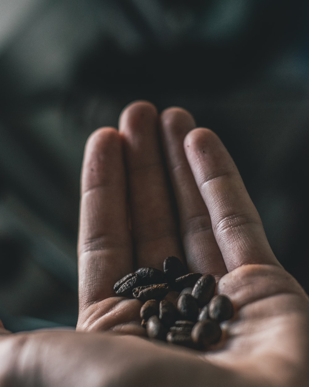 selective focus photography of coffee beans on person's hand