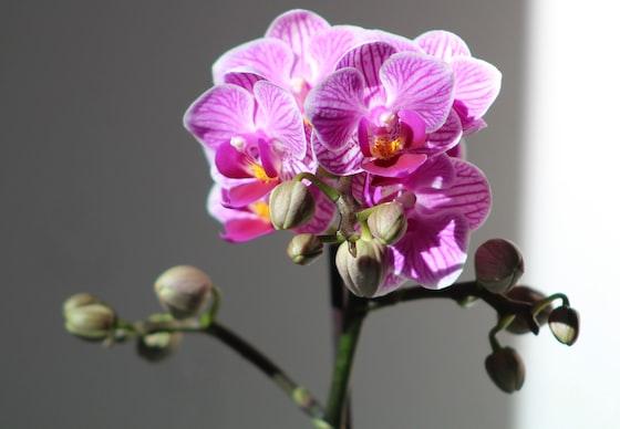 Saiba a forma correta de plantar orquídeas no seu jardim