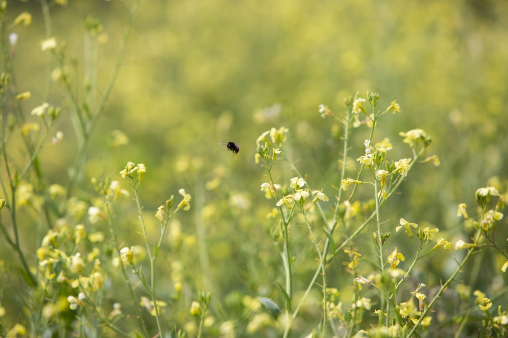 focus photography of yellow petaled flowers