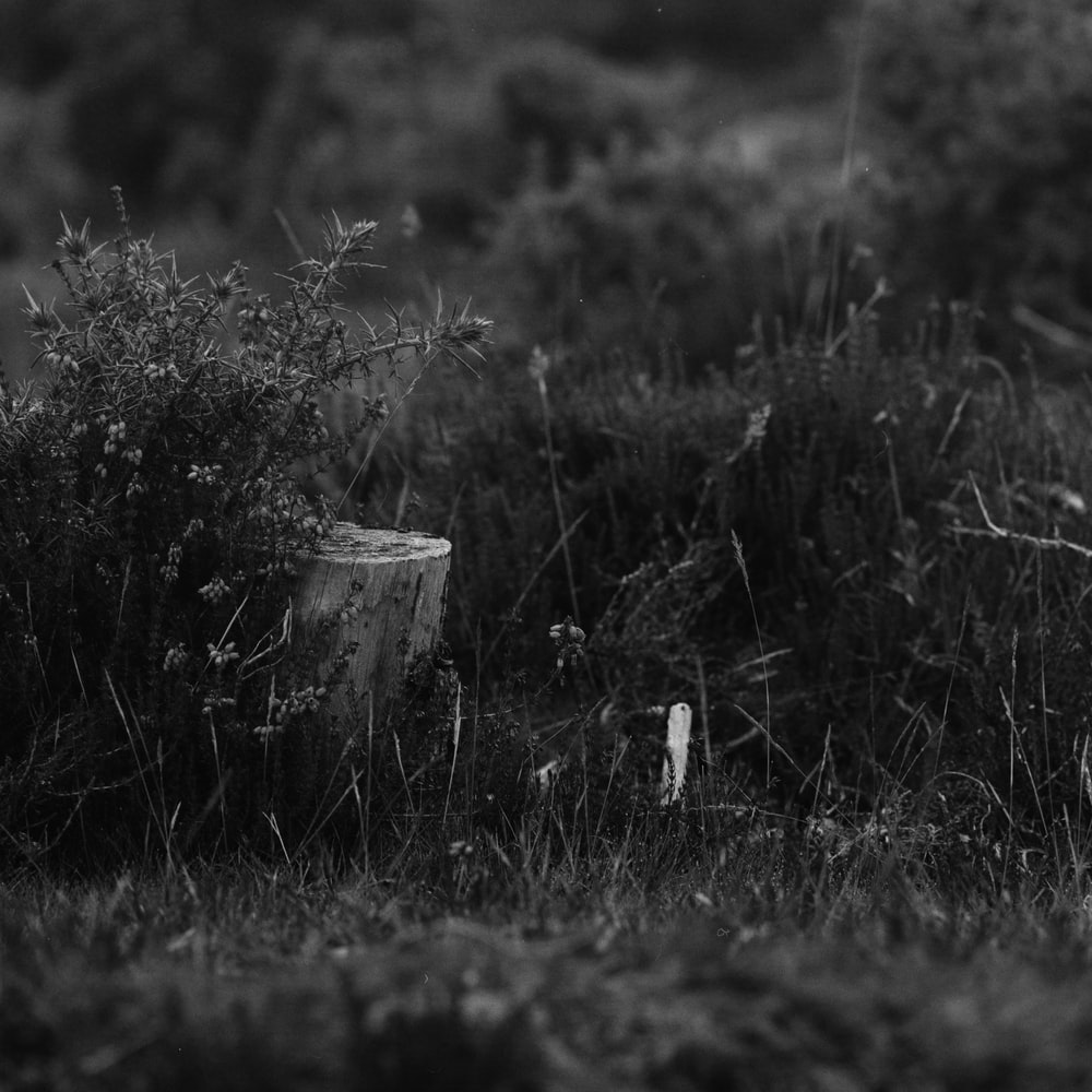grayscale photo of grass