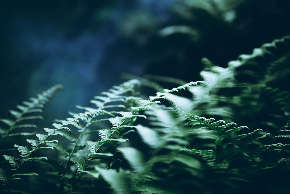 green fenr