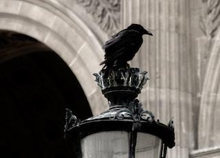 crow on lamp post