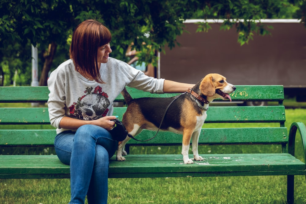 woman sitting on bench near tri-color beagle
