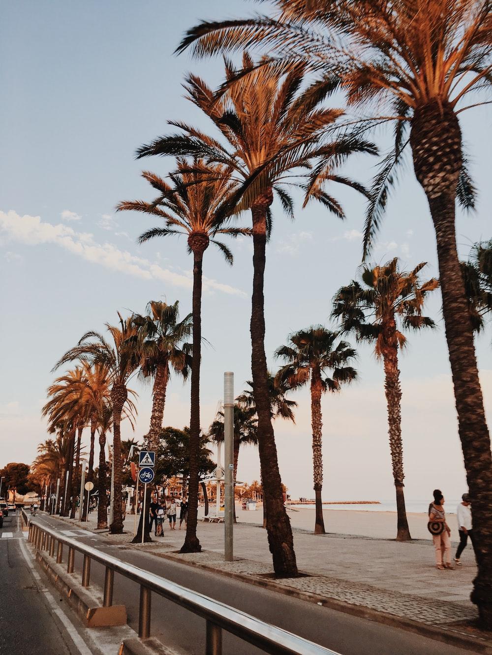 trees beside beach