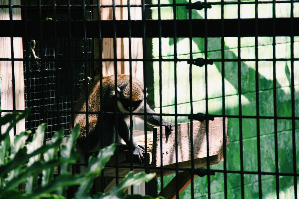 brown and black primate inside cage