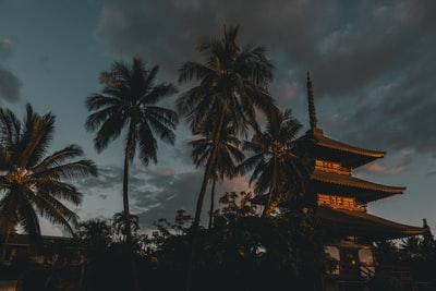 photography of pagoda building beside coconut palm trees during nighttime