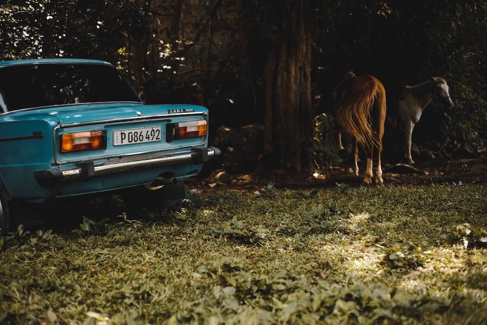 car near tree