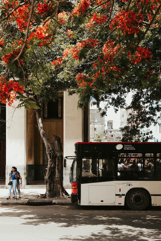 bus beside road