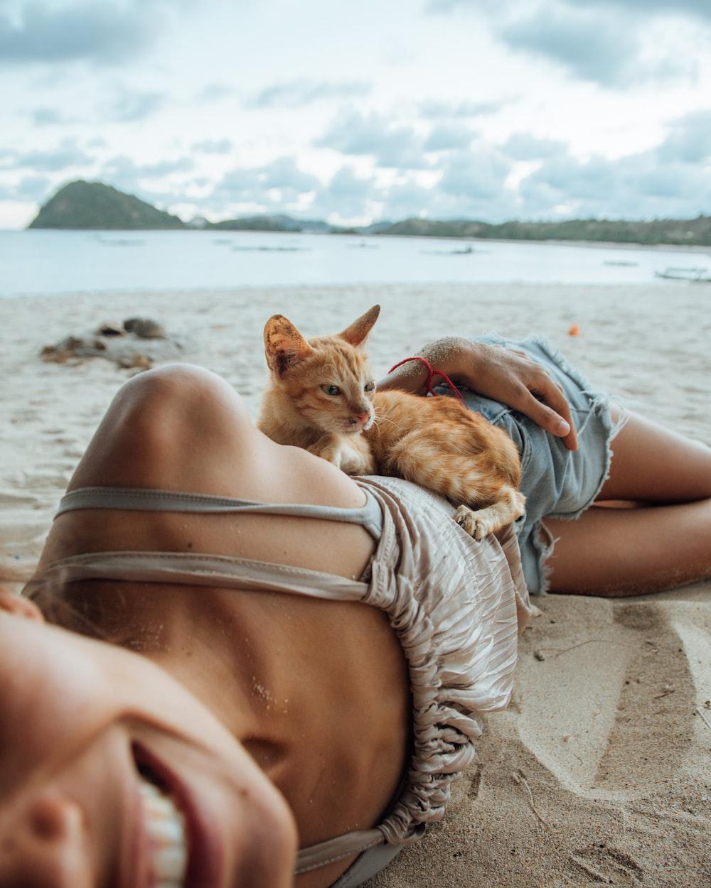 orange tabby cat on woman body