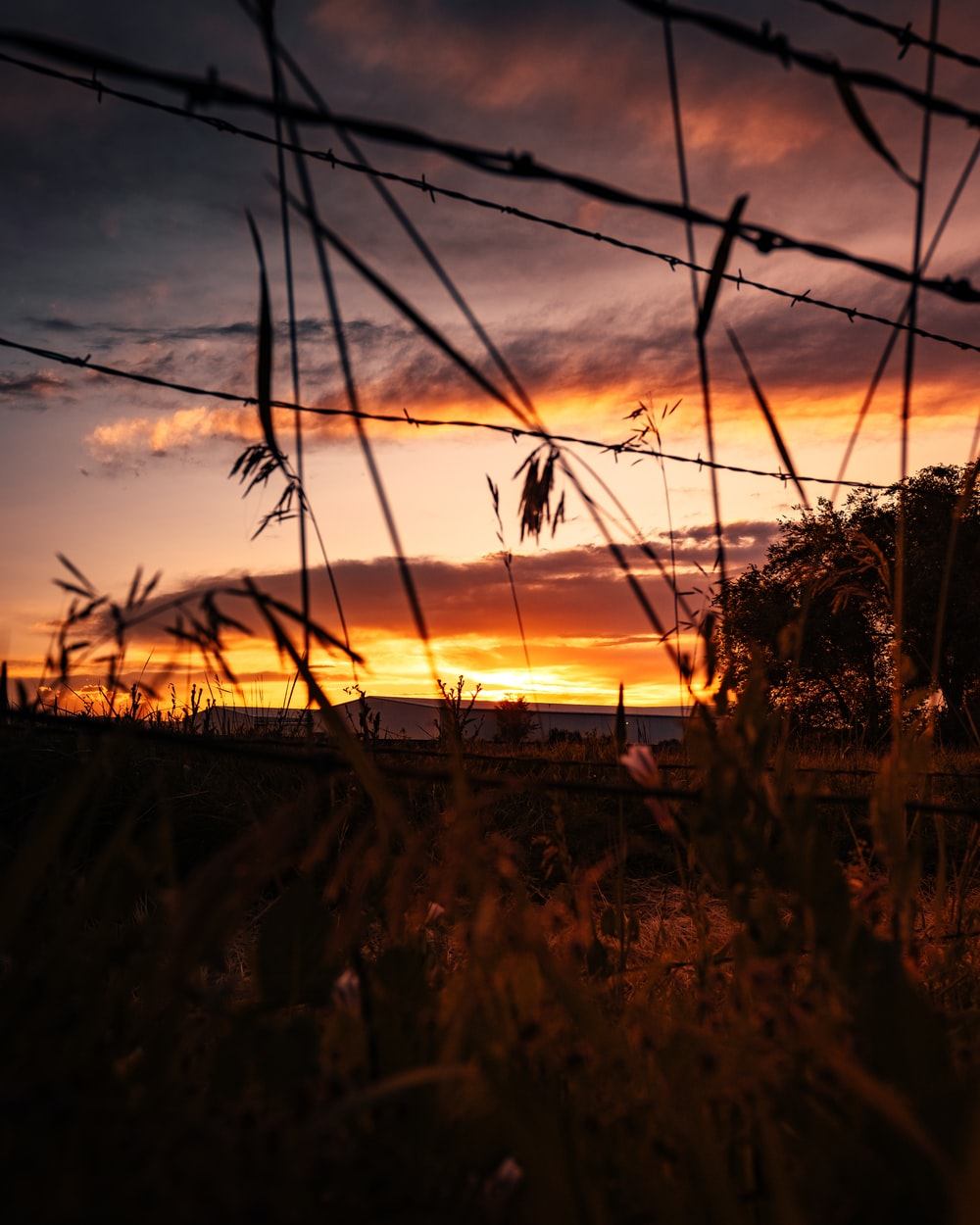 barb wire and brown grass at golden hour