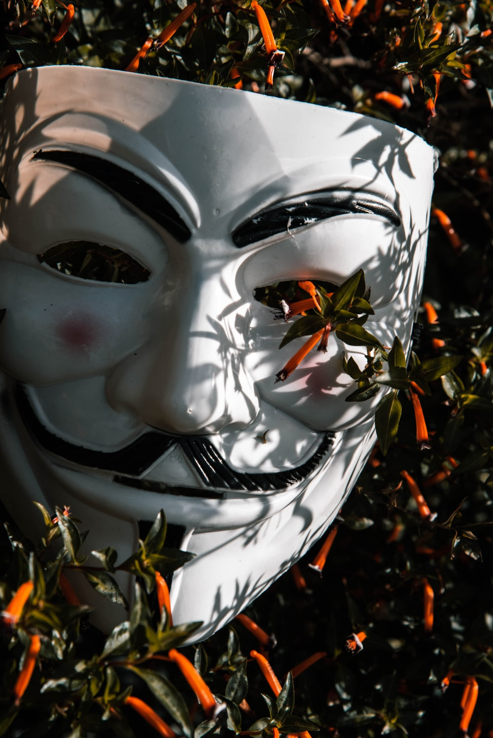 Guy Fawkes mask on plant