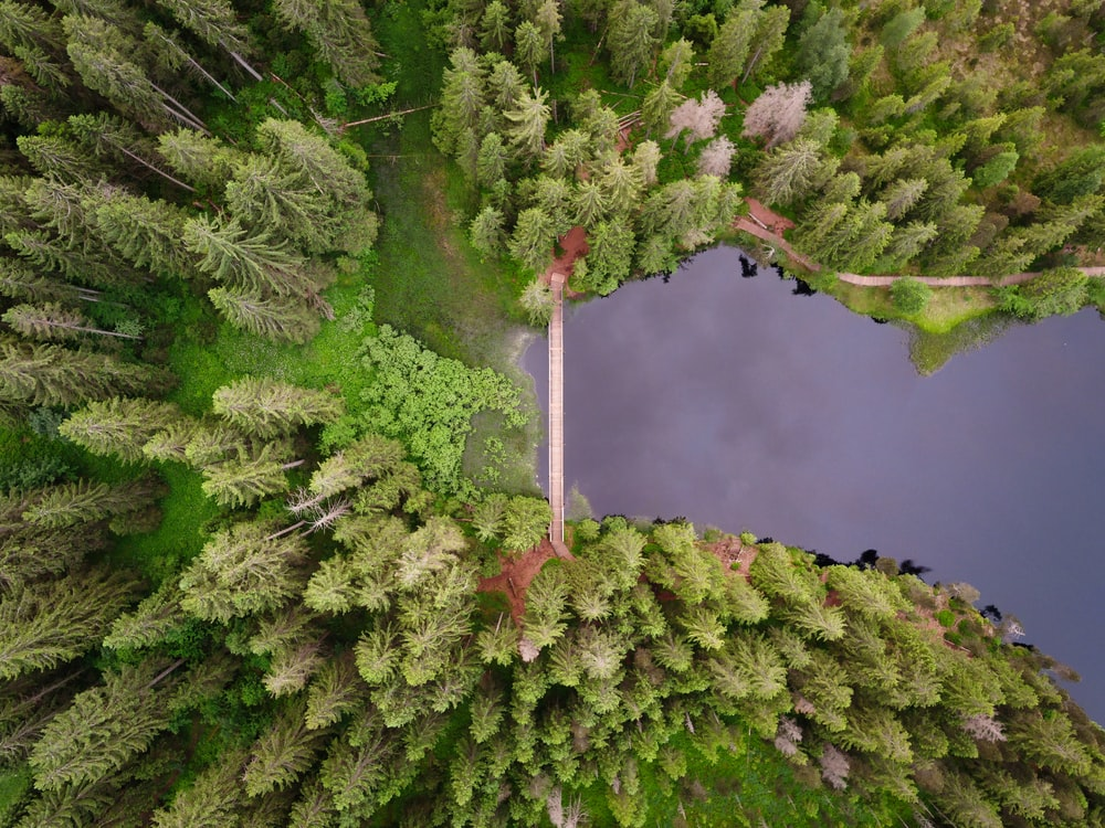 aerial photography of green leaf tree