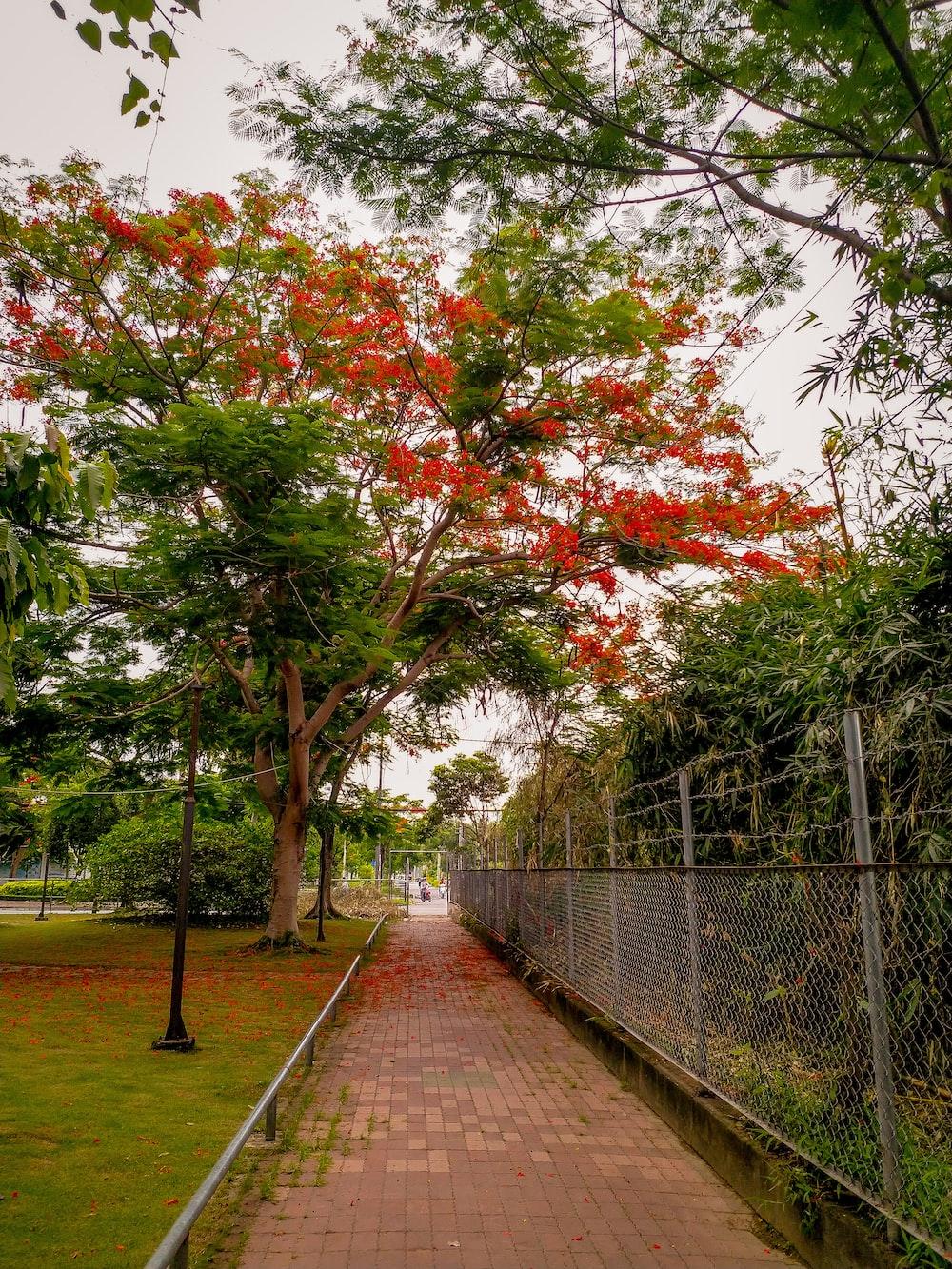 empty pavement under trees