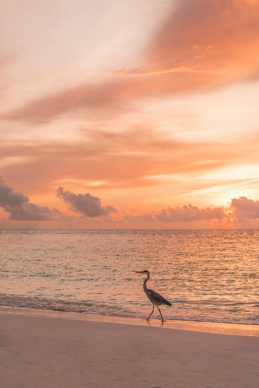 black and brown swan beside seashore