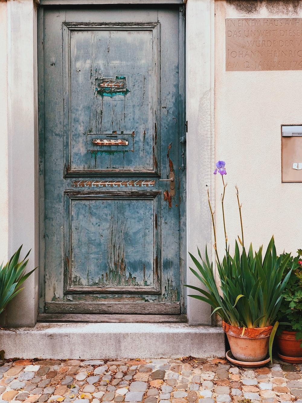 plants near door
